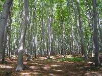 Las na Bukowej Górze